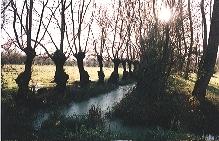 Marais mouillé bocager